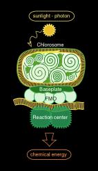 Sketch of the chlorosome antenna complex of Chlorobium-Tepidum